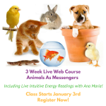 6-session-animals-as-messengers-live-web-courseincluding-live-energy-readings-with-ana-mariaget-clear-about-what-the-animals-are-showing-you