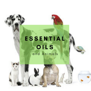 the animal desk reference essential oils for animals pdf